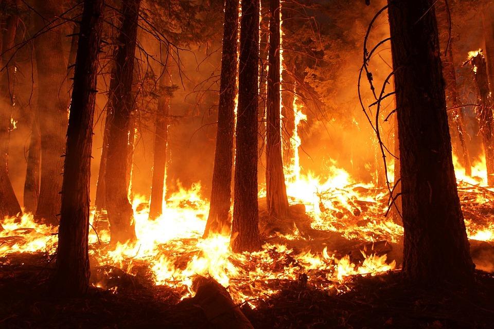 Drones para reforestar bosques quemados